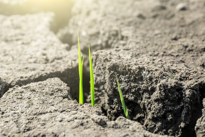 Green grass sprout grow on dry land,concept background