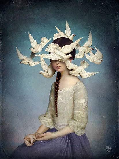 Birds by Christian Schloe