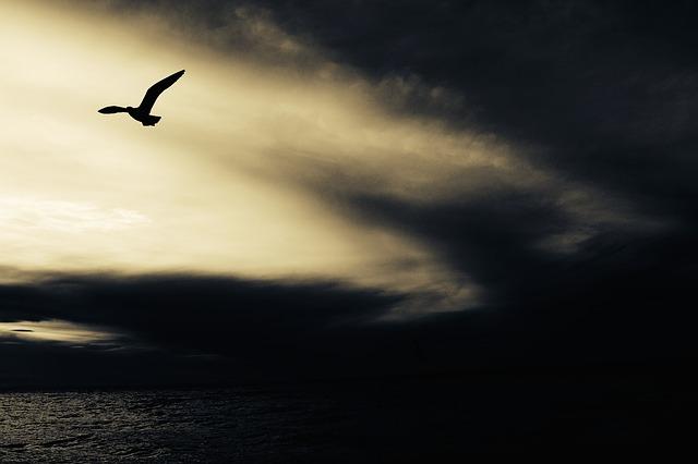 seagull-768785_640
