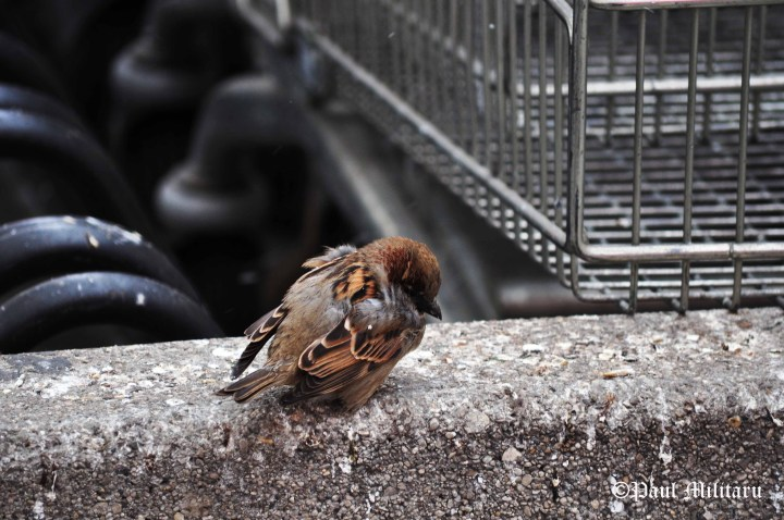 shriveling cold sparrow